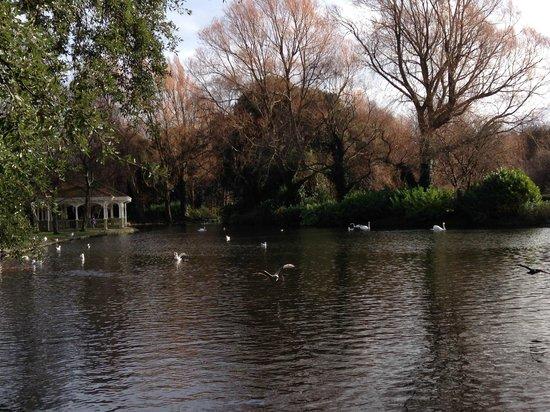 Parque St Stephen's Green: Пруд с лебедями, чайками, утками и цаплями.