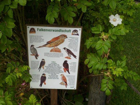 Erlebnisburg Hohenwerfen: bird chart