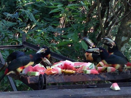 duPlooy's Jungle Lodge : Birds at bar