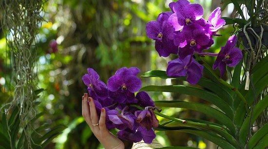 Hilton Phuket Arcadia Resort & Spa: орхидеи
