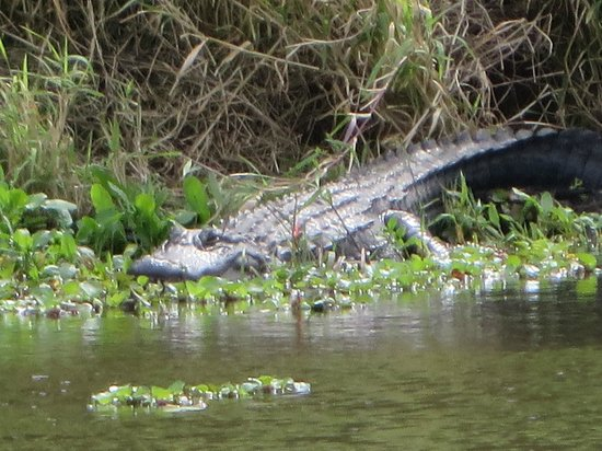 Myakka River State Park: Zoomed in to capture this fella