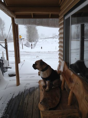 Golden Eagle Lodge : Travelin' Jack watching the Snow fall from the Porch Bench.