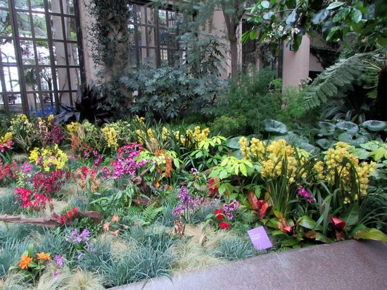 Longwood Gardens : SO MANY ORCHIDS