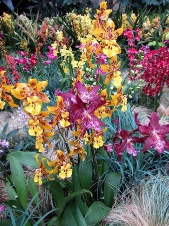 Longwood Gardens : BEAUTIFUL ORCHIDS