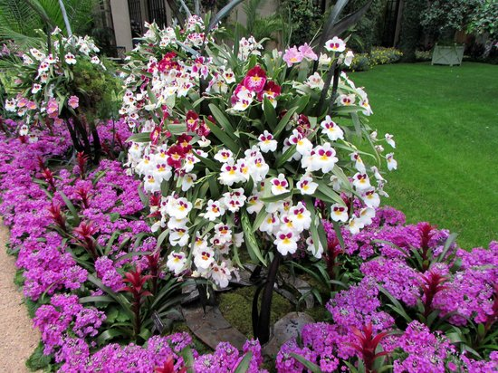 Longwood Gardens: ORCHIDS