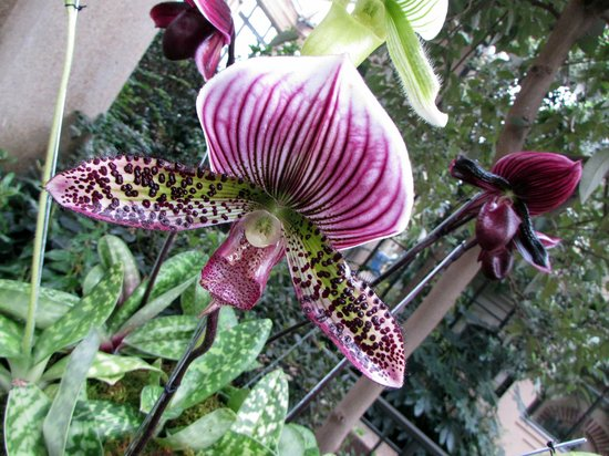Longwood Gardens: ORCHID