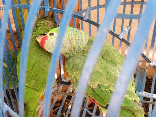 Art Hotel Managua: Birds at hotel
