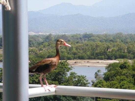 Grand Luxxe Nuevo Vallarta: Pelican?