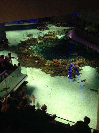 National Aquarium: New black tip reef exhibit