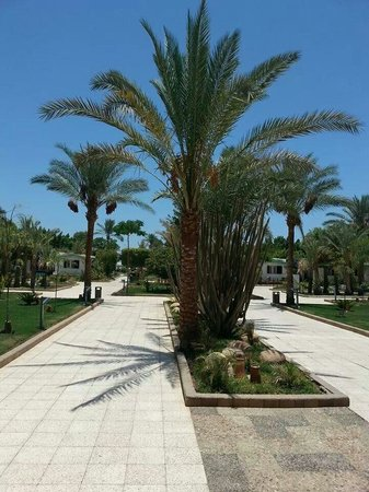 Ghazala Beach Hotel : The grounds, walking from the main building to the beach/pool