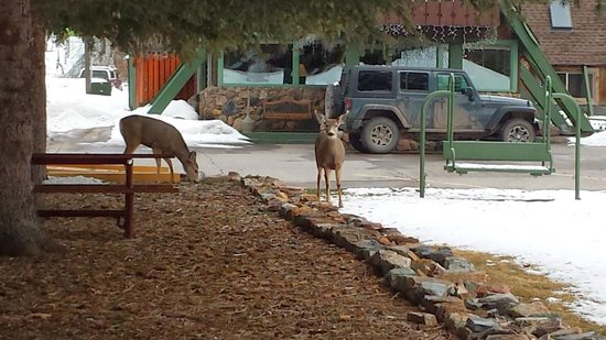 Twin Peaks Lodge & Hot Springs: Deer in the Motel Courtyard