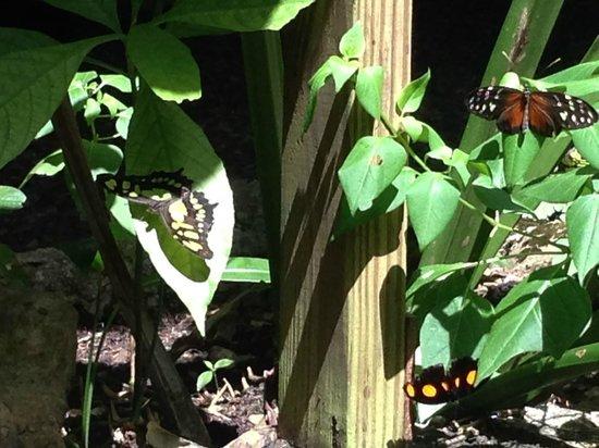 Green Hills Butterfly Ranch : butterfly