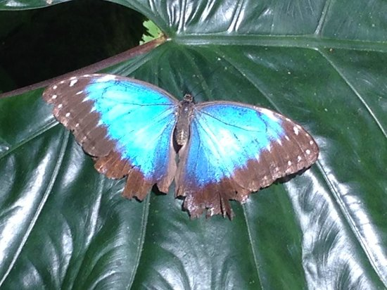 Green Hills Butterfly Ranch : blue something