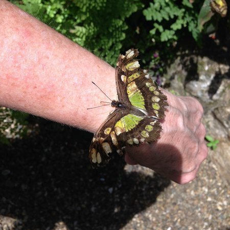 Green Hills Butterfly Ranch : landed on my green watch