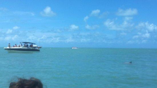 Dolphins Bay: Mas delfines