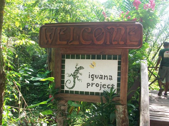 Green Iguana Conservation Project: Entrance