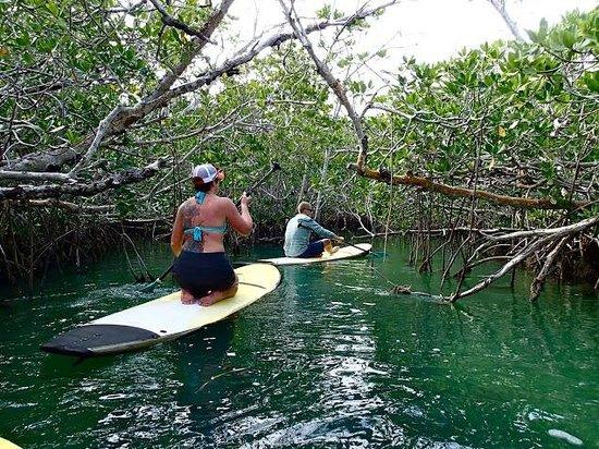Mellow Ventures: Key West - Mangroves
