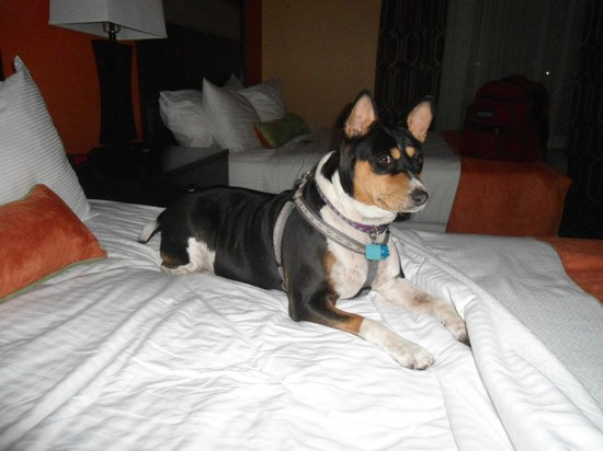 La Quinta Inn & Suites Florence : Chloe's Favorite Place to Stay