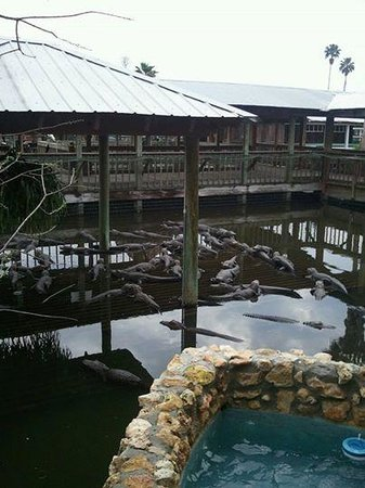 Gatorland: More than you think.