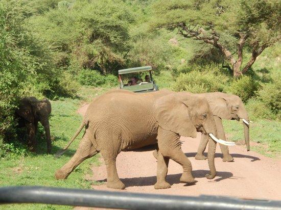 Lake Manyara Serena Lodge: Elephants