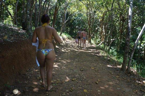 Jeribucacu Beach : Trilha para praia