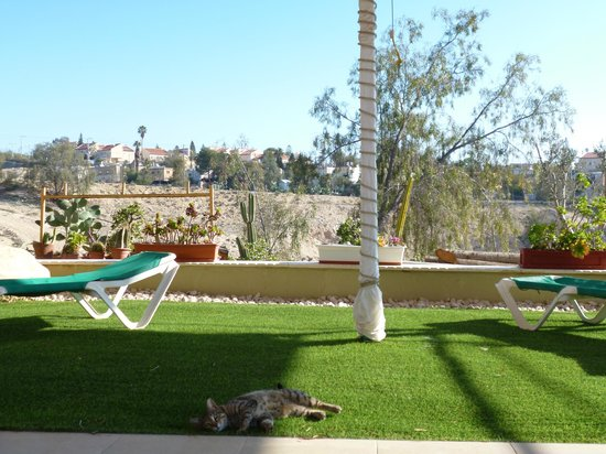 Desert View _ Cohen House: The view from our breakfast table, complete with cute cat