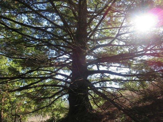 Sanborn Park : Trees
