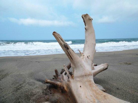 Playa Los Angeles: La magnifique plage