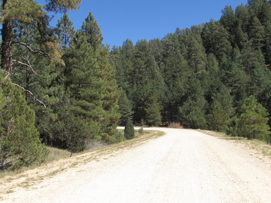 Bill Hall Trail: NF 422 - gravel road for most of the way