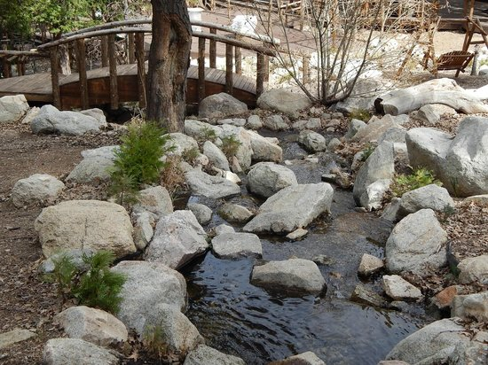 Arrowhead Pine Rose Cabins : Creek that runs down the hill to one of  the many  Koi ponds