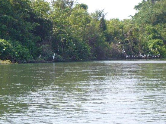Aventura Mundo : Birds along the river bank