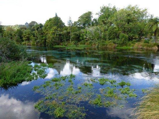 Hamurana Springs: starting the walk