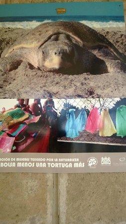 Soma Surf Resort: Conservation support