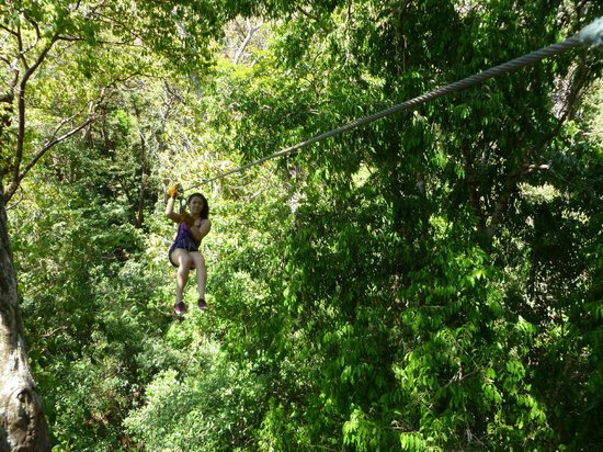 Wingnuts Canopy Tours: Flying through the treetops