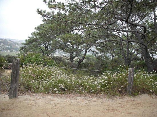 Torrey Pines State Natural Reserve: 1