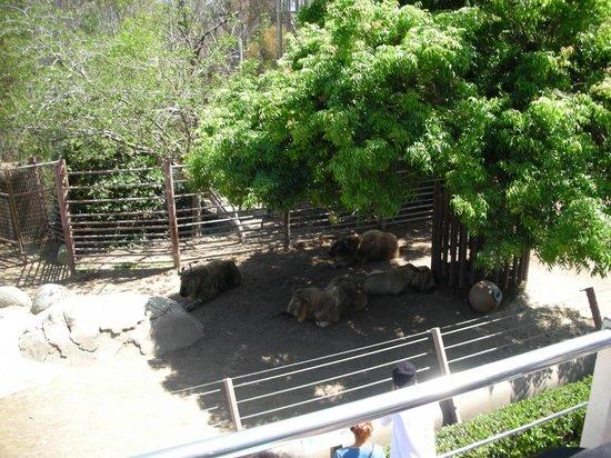 San Diego Zoo: 2