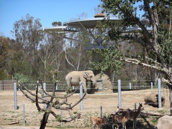 San Diego Zoo: 3