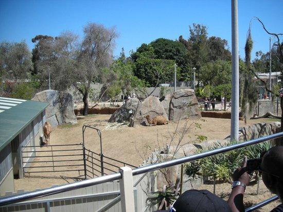 San Diego Zoo: 4