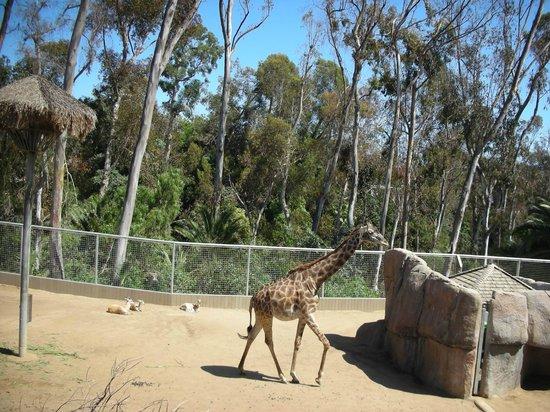 San Diego Zoo: 5