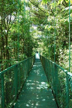 Parque Selvatura: hanging bridge