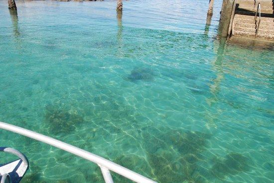 Tiritiri Matangi Island: Beautiful waters