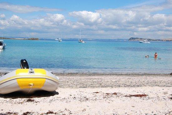 Tiritiri Matangi Island: Looking back at Auckland
