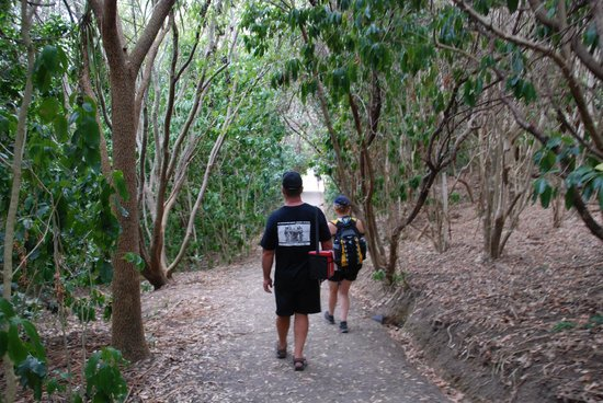 Tiritiri Matangi Island: Path through the bush