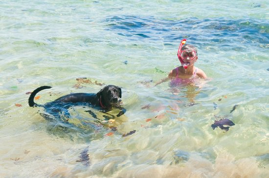 Korrigan Lodge: Bassam the wonder dog loves the ocean! Take him with you to the beach!