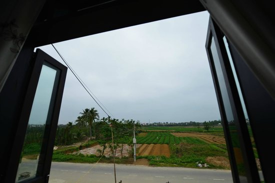 Gia Field Homestay: Rice field view
