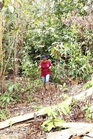 Blue Mountain Kelong: Jungle trail