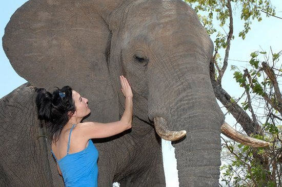 Kwa Madwala Private Game Reserve: Elephant Interaction