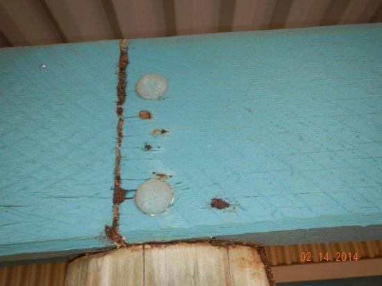 Ningaloo Caravan & Holiday Resort: Termites
