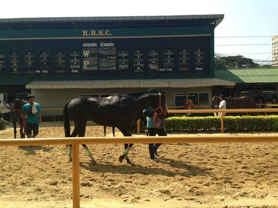 The Royal Bangkok Sports Club: maa (horse)