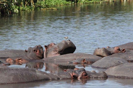 andBeyond Ngorongoro Crater Lodge : Great timing